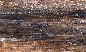Reed leaf<br>(Phragmites australis)