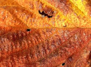 warm browns / autumn leaf