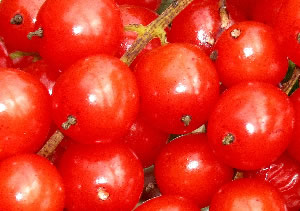 Red Currant<br>(Ribes rubrum)